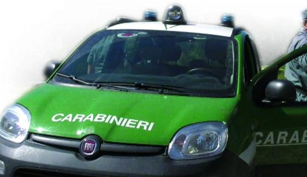 COTRONEI (CROTONE), sequestrati manufatto e area disboscata